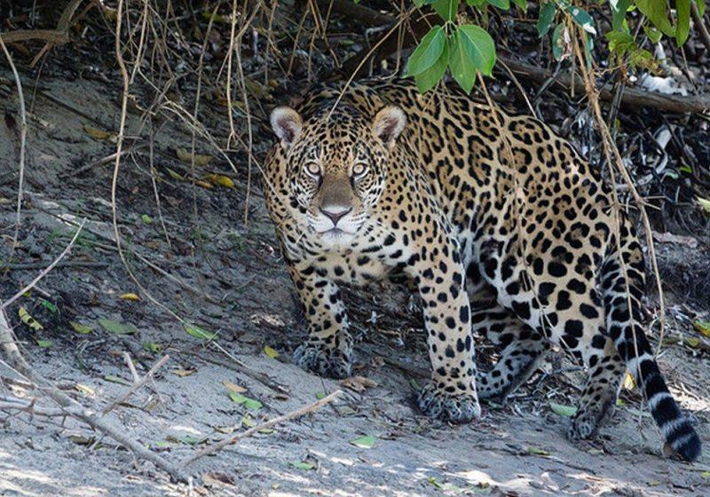 Miranda - O paraíso do pantanal sul