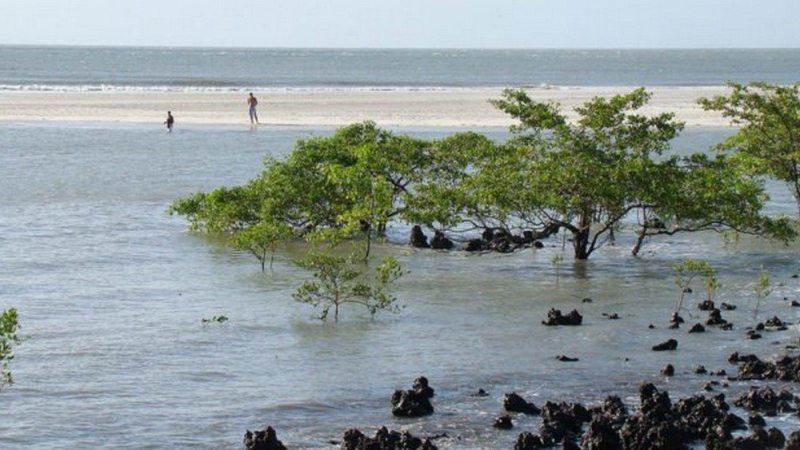Ilha de Algodoal (PA)