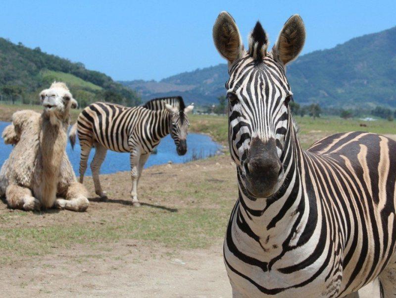Safari: animais exóticos Ilha Grande
