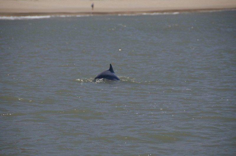 Golfinhos Na Praia De Pipa