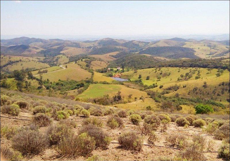 Cunha Vista Plantação De Lavanda