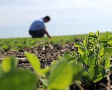 melhores cursos agronomia