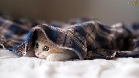 Frio, proteja os seus animais, principalmente os de pelo curto. melhorsaude.org
