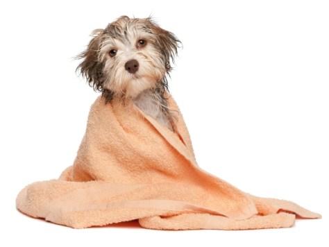 Cachorro-banho-seco