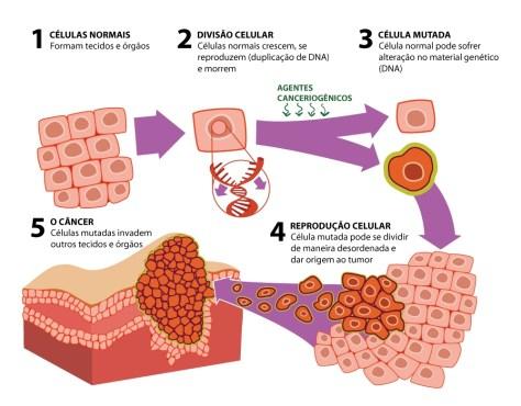 Fases do processo de formação de um cancro