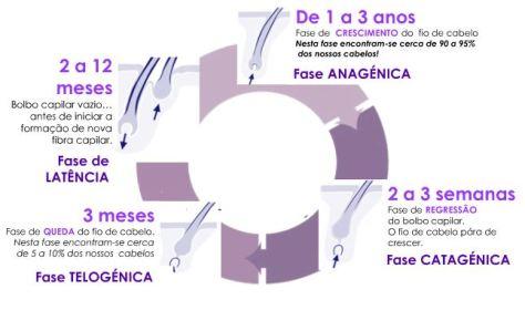 Fases do ciclo de vida do cabelo