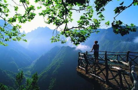 Madeira floresta