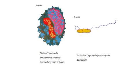 Legionella melhorsaude.org melhor blog de saude