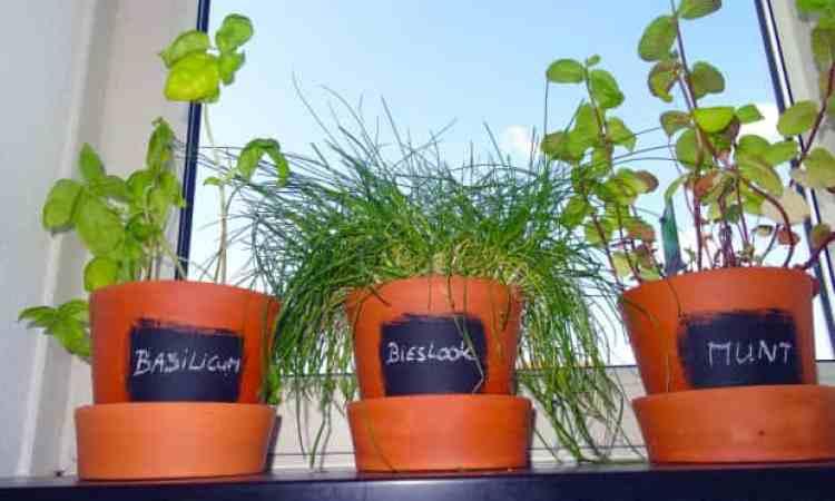 krijt verf en tera cotta potten kruidenplantjes