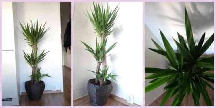 Lege plekjes in huis re-stylen - yucca