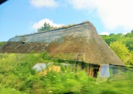 Thatched roof with growth (from the bus so a bit blurred and reflective)