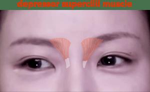 depressor supercilii - FACS - Facial Action Coding System