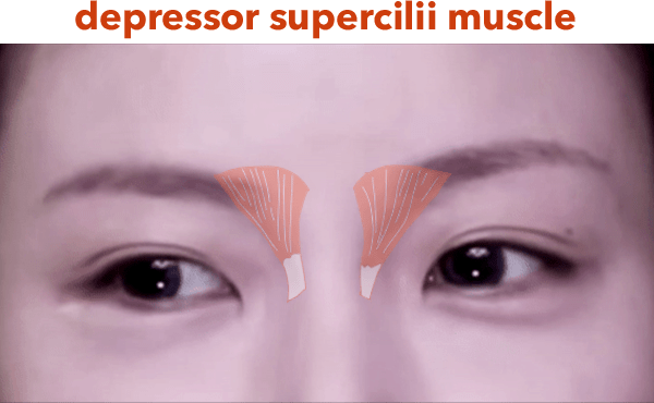 depressor supercilii