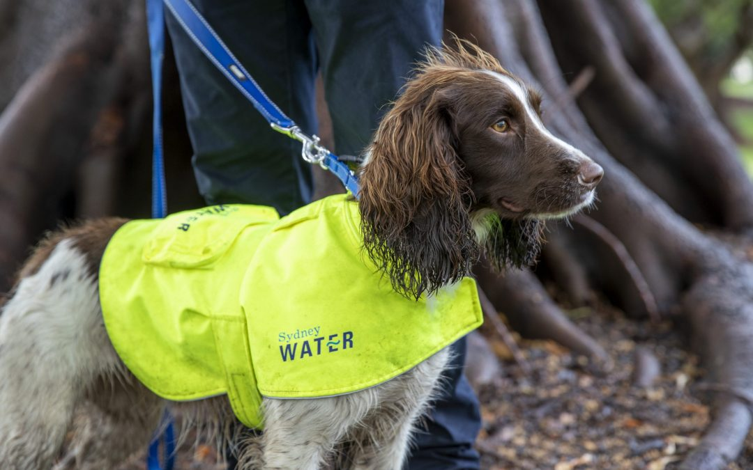 Man's Best Friend on the Hunt for Hidden Leaks