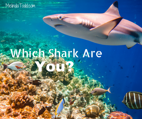 Which Shark Are You?