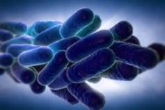 Legionella Pneumophila Bacteria