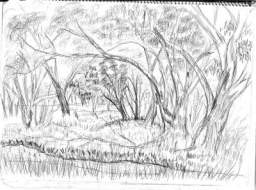 lincoln.a.ward.crayon.australian.bush