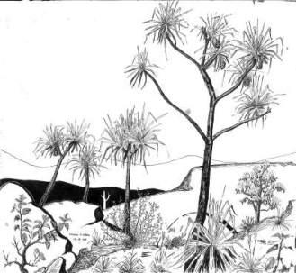 lincoln.a.ward.pandanus