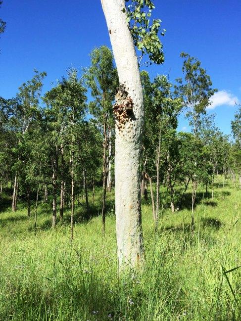 grasslands in girringun national park