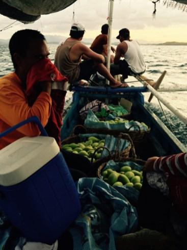 mangos sent to the market