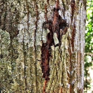 broken-bark