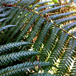 morning-light-on-ferns
