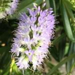 wonderful shades of lilac