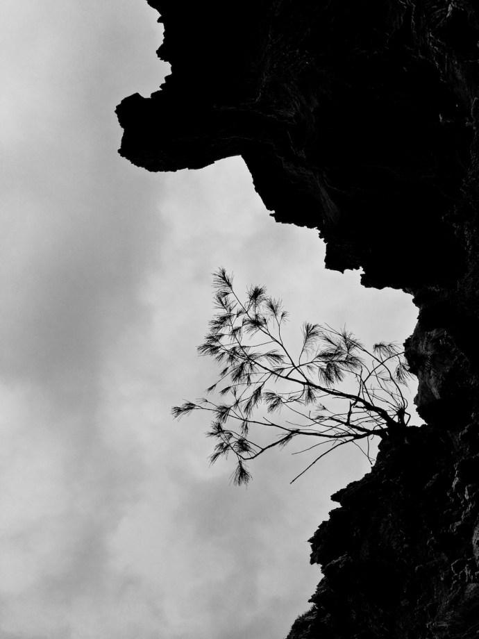 Clinging by Melinda J. Irvine