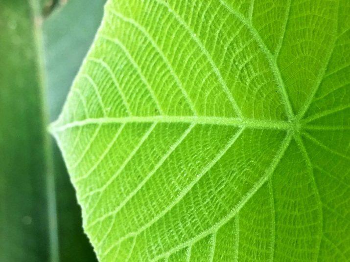 green leaf3
