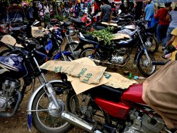 motorbikes covered in cardboard and leaves in the summer heat