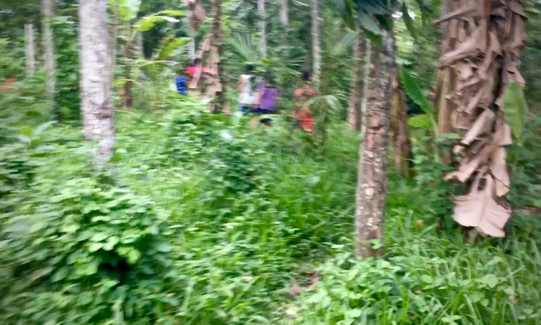 blurred photo of children walking along a bush trail