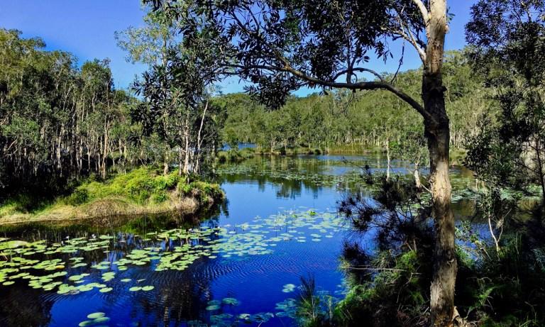 The Urunga Wetlands