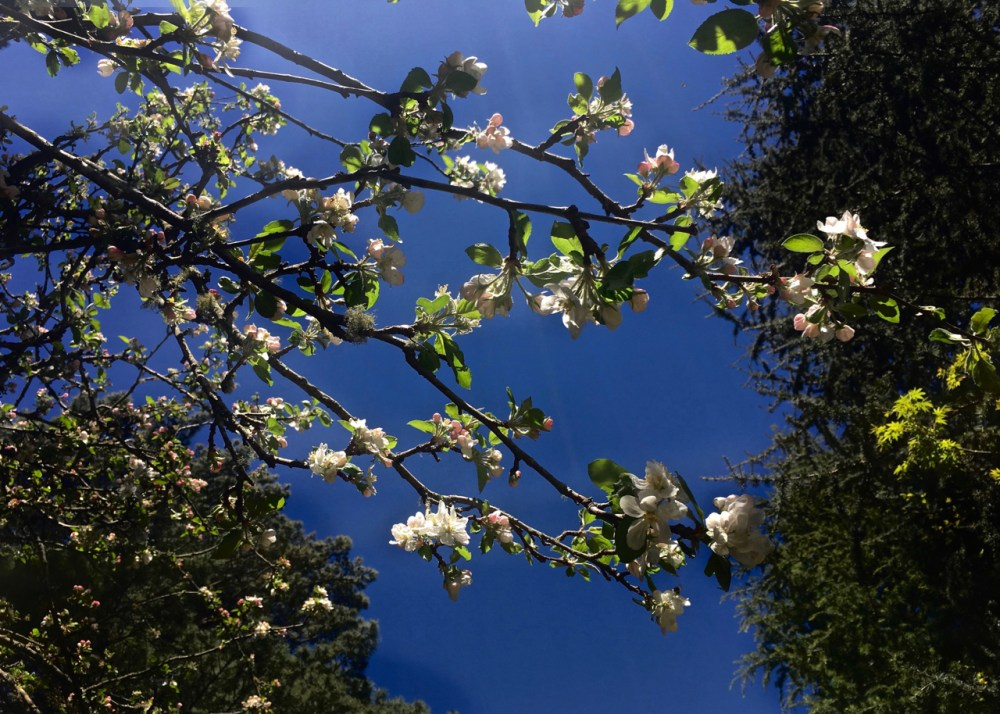 spring blooms against a blue sky