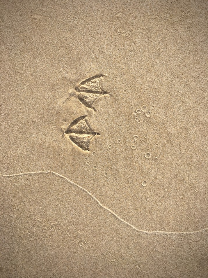 webbed footprints in sand