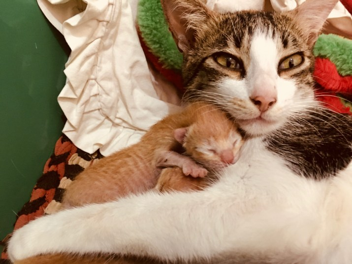 mother cat and baby