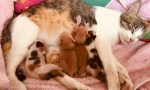 Maxine and the Kittens (banner)
