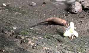 little white flower with a brown leaf