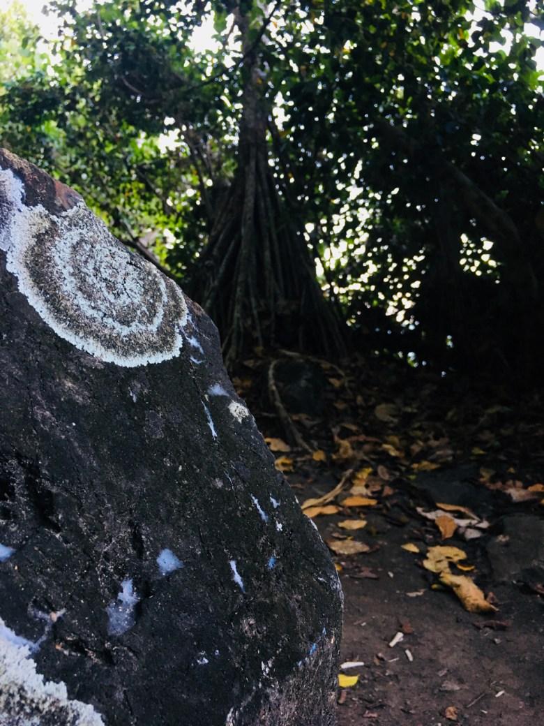 lichen stains