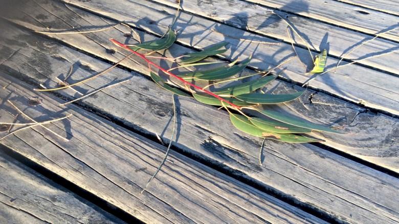 broken leaves on a boardwalk