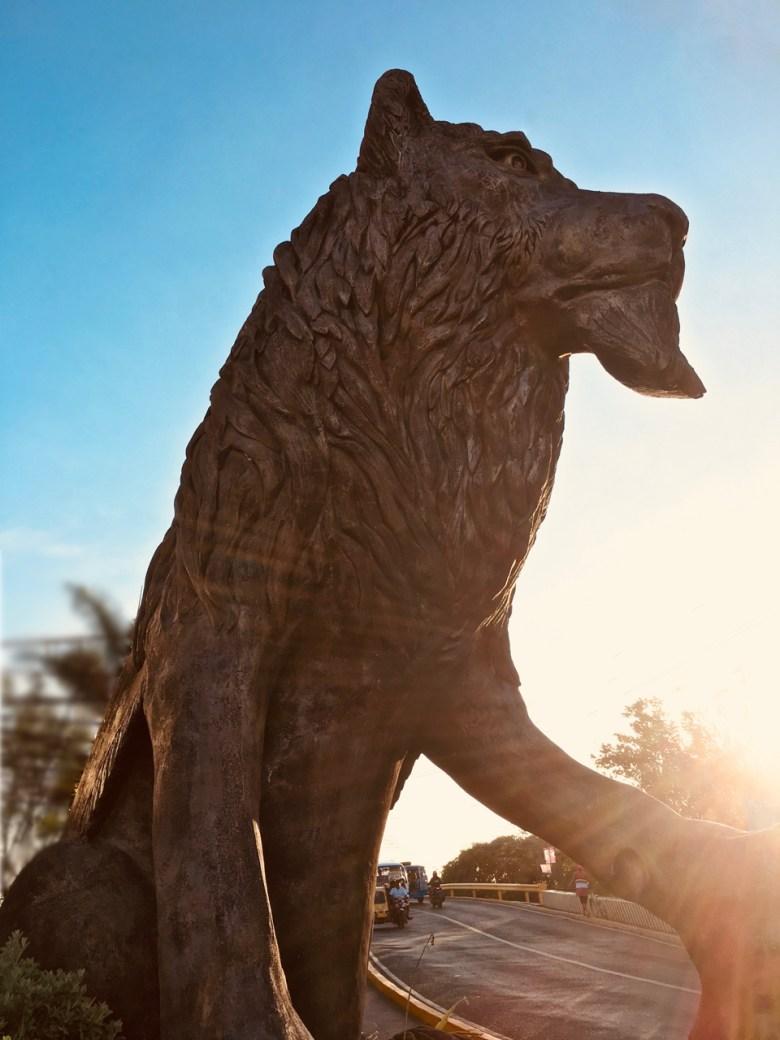 street cat of Molo lion statue