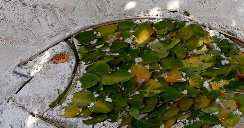 beach art of mangrove fish made from leaves
