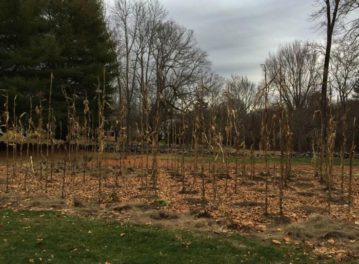 Thoreau Garden 700x515 - Old Manse