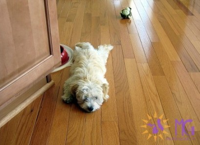 exhausted puppy after a walk diary of a dog
