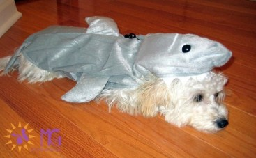 puppy dressed in shark halloween costume diary of a dog