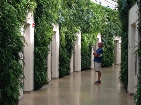 "The ""living wall"" bathroom area in the conservatories! Behold, and be amazed."