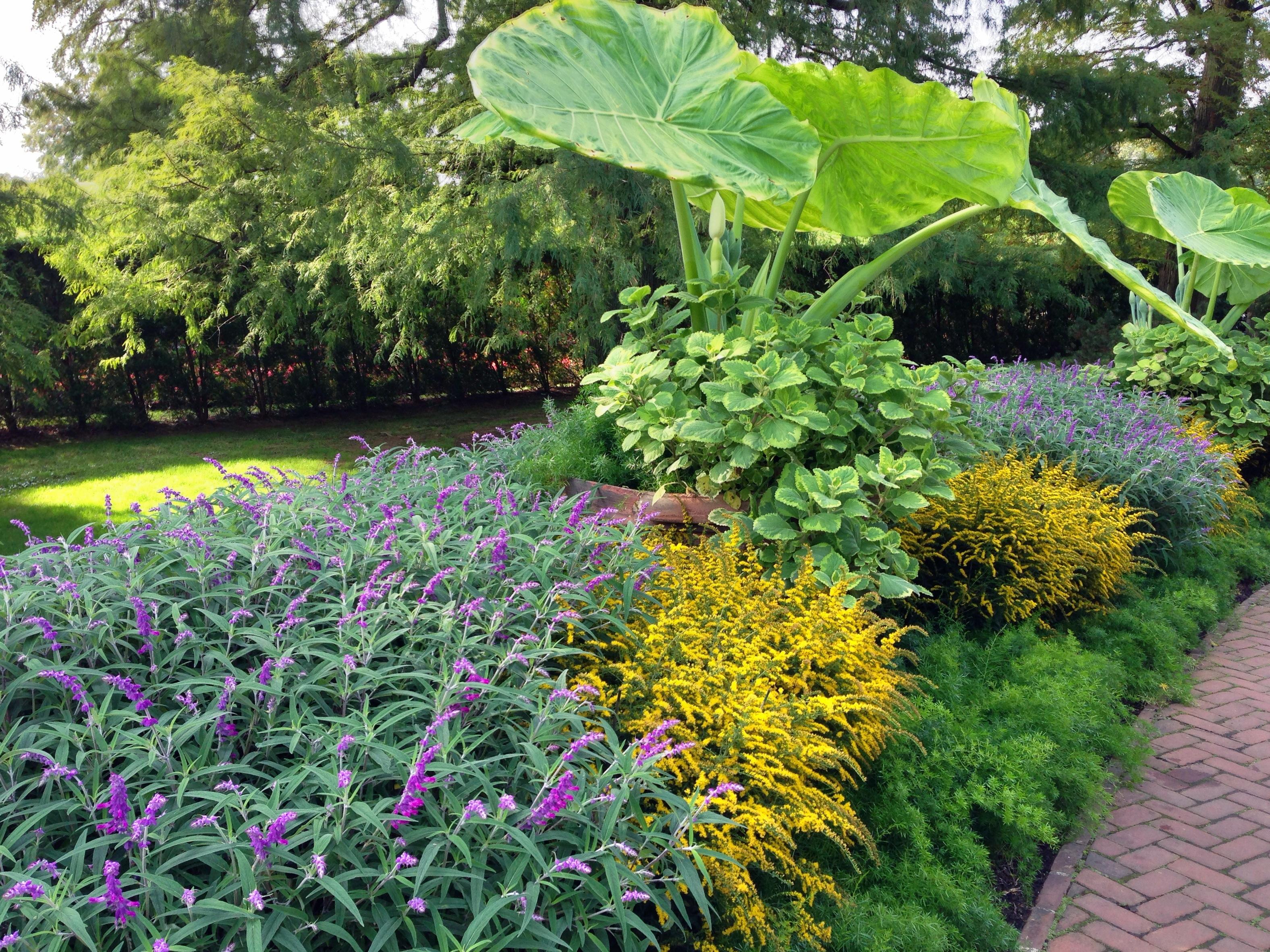 Longwood Via Iphone Garden Shoots