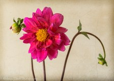 Dahlia stem with textures added
