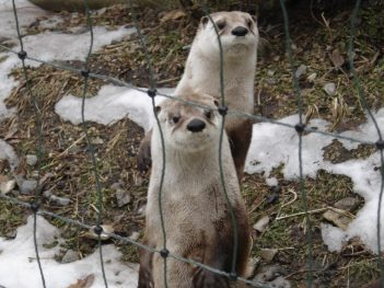 my lil' otter friends 4286089314[H]