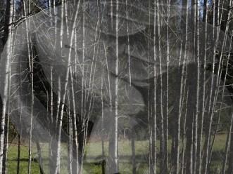 plantboy_vermont trees_big boy