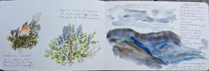 Blackburnian Warbler Panther Mountain 071017